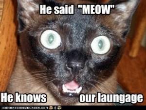 Credits:  Cat Meme Headquarters