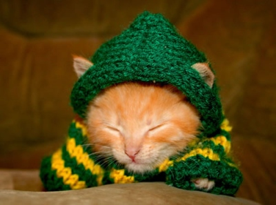 Sometimes, when the application process gets me down, I have to go look at cute kittens.