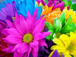colorfulFlowers